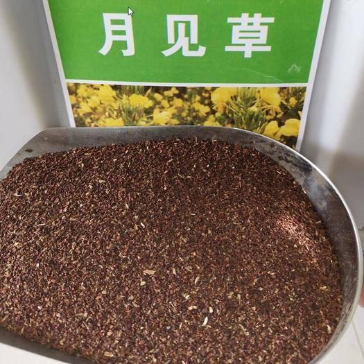河南省郑州市二七区月苋草种子 月见草种子美丽月见草种子