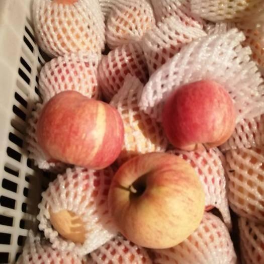 新疆維吾爾自治區阿克蘇地區溫宿縣阿克蘇冰糖心蘋果 80mm以上 條紅 紙袋
