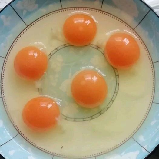 湖北省荊門市京山市 松樹林 桃園散養土雞蛋 包新鮮 420枚