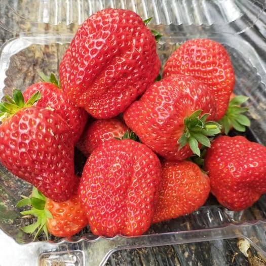山西省运城市夏县 太空草莓,奶油草莓,