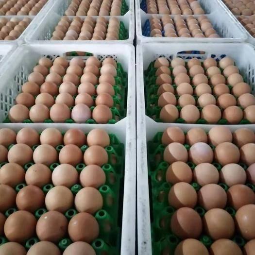 河南省南陽市唐河縣紅皮雞蛋 品質蛋,值得信賴