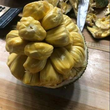 泰国进口菠萝蜜红心新鲜水果干苞红心菠萝蜜大果非海南黄心菠萝蜜