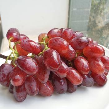 克伦生葡萄 攀枝花优质克伦生,绿色,生态,口感风味佳