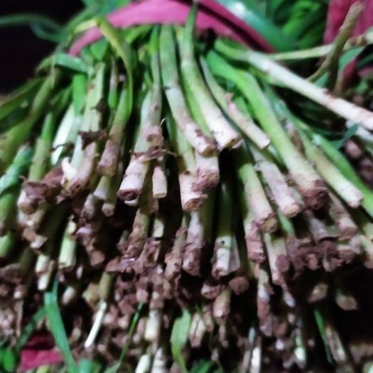 河南省鹤壁市浚县 长期大量供应各种品类优质冷棚暖棚韭菜