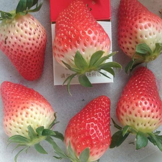 山东省青岛市平度市 甜宝草莓价格跳水