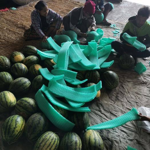 云南省德宏傣族景颇族自治州瑞丽市甜王西瓜 各种品种都有