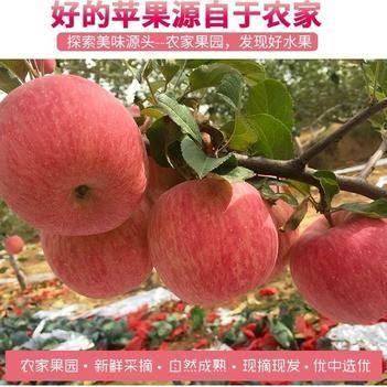 蘋果水果新鮮山西脆甜紅富士蘋果當季冰糖心蘋果10斤