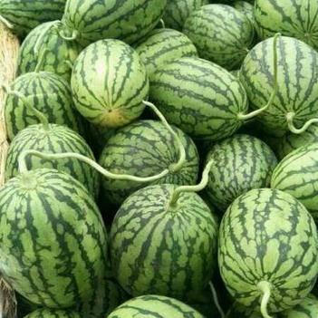 8424西瓜 6斤打底 9成熟 1茬 无籽