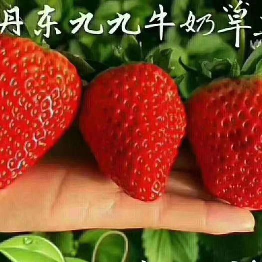 遼寧省丹東市東港市 丹東東港馬家崗99草莓3斤全大果裝誠招微商電商團購合作伙伴