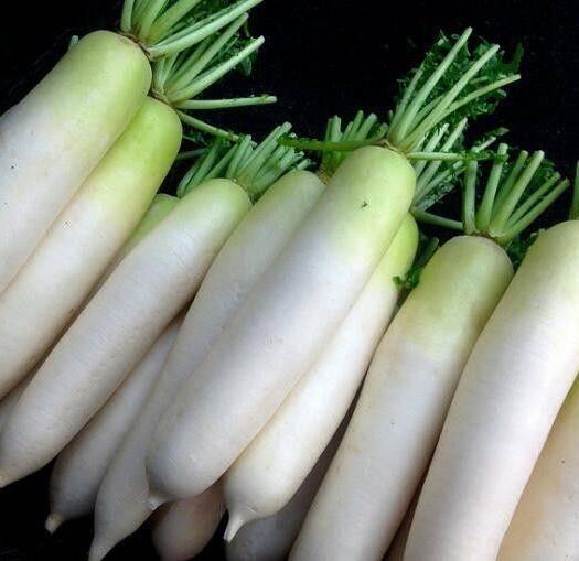 四川省南充市嘉陵区韩国白萝卜 现供