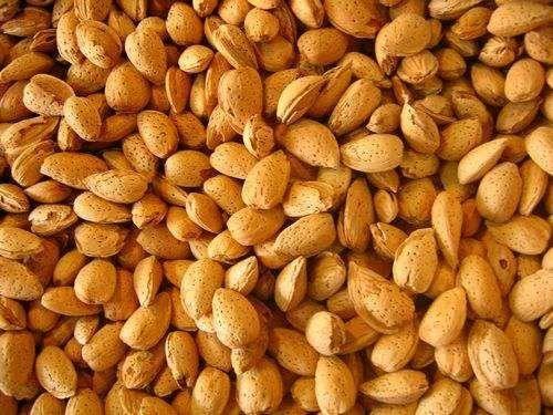 新疆維吾爾自治區烏魯木齊市沙依巴克區 巴旦木是新疆的特產,綠色食品健康的保證。