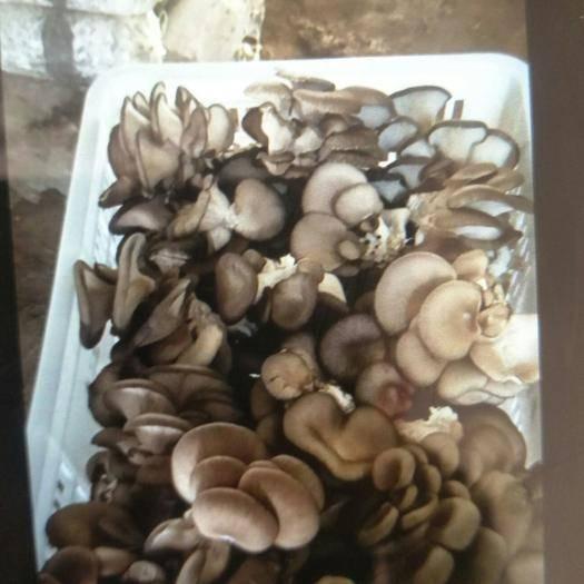 山东省德州市武城县 蘑菇