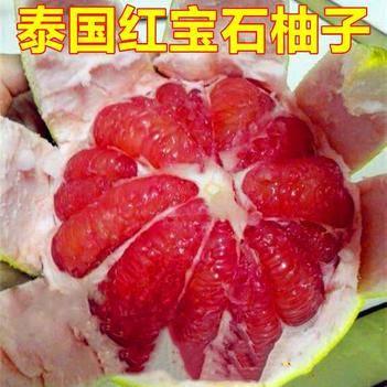 泰國紅寶石柚苗 泰國紅心柚苗,基地直供,現挖現發,包質量,包純度