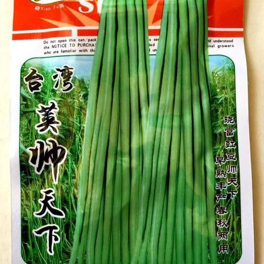 四川省成都市锦江区 长青豆角种子无架豆角种子小叶豆角种子油青豆角种子