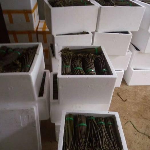 四川省泸州市江阳区高山蕨菜 鲜货