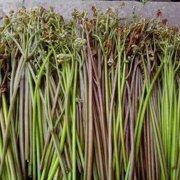 蕨菜根 鲜货