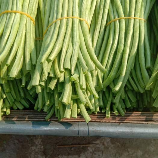 海南省三亚市天涯区长豇豆 40cm~70cm