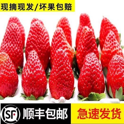 四川省内江市威远县 空运新鲜草莓水果3斤奶油5斤精品礼盒包装送人露天