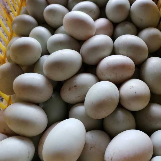 廣西壯族自治區玉林市博白縣麻鴨蛋 食用 箱裝