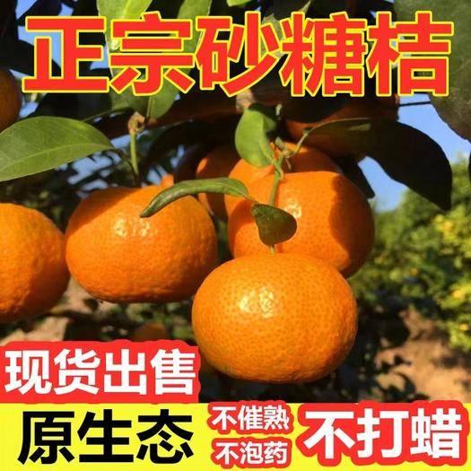 广西壮族自治区桂林市全州县沙糖桔 正宗广西  一级果 保温箱10斤包邮