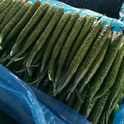 山東省臨沂市蘭陵縣 優質大棚黃瓜大量上市,新鮮,好看