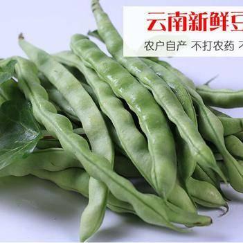 云南新鲜四季豆角农家新鲜蔬菜芸豆角无茎豆四季豆现摘现发