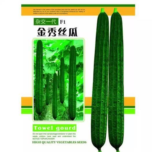 福建省漳州市南靖县丝瓜种子 金秀丝瓜 长约50-60厘米 瓜色墨绿 棱沟浅 肉质坚实