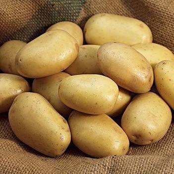 荷蘭15號土豆 互利共贏