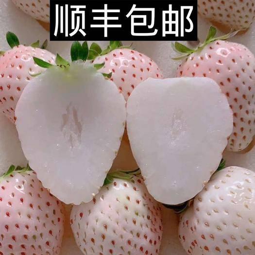 山东省烟台市栖霞市淡雪草莓 散发着妙龄十八的馨香,拥有宛如初恋的甘甜。