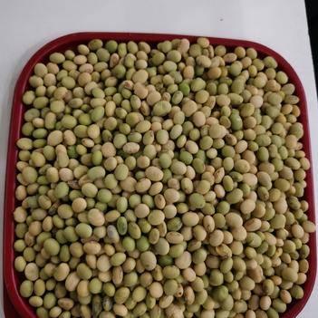 小?;贫?湖南农家自种黄豆 无转基因无污染绿色环保
