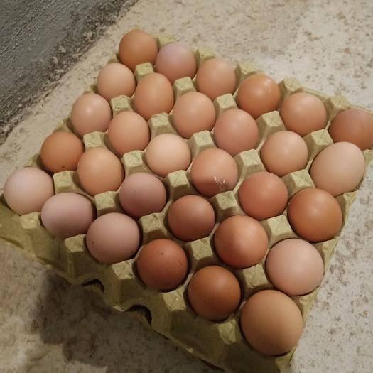 江西省九江市德安縣普通雞蛋 一箱360枚    常年供應  量大從優