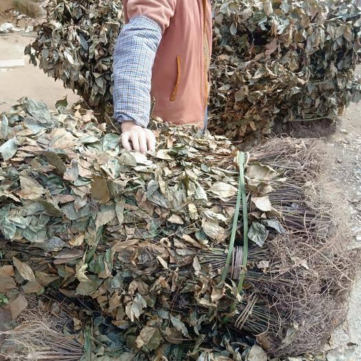 广西壮族自治区河池市环江毛南族自治县 草 珊瑚供应