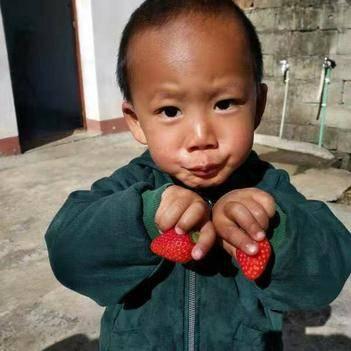 大凉山露天草莓
