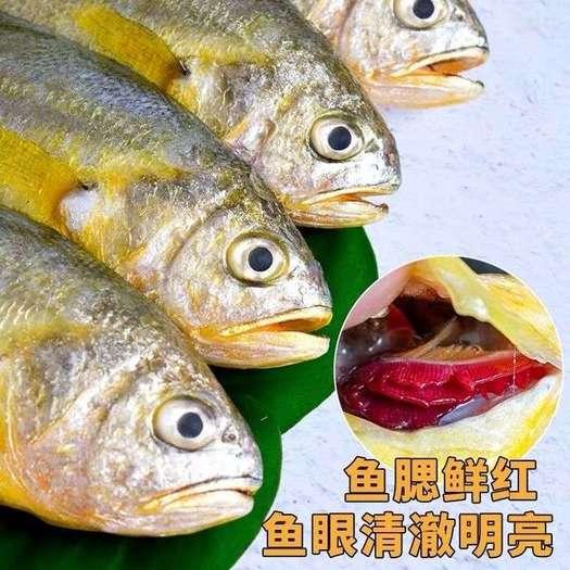 江蘇省鹽城市響水縣 【順豐】黃花魚海捕裝冷凍小黃魚大新鮮5斤鮮活批發海鮮水產