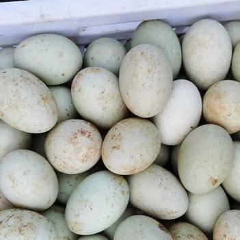 主營廣元,成都地區新鮮土鴨蛋