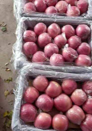 山西省運城市萬榮縣靈寶蘋果 萬榮,臨猗冷庫紙加膜大量出售,需要聯系