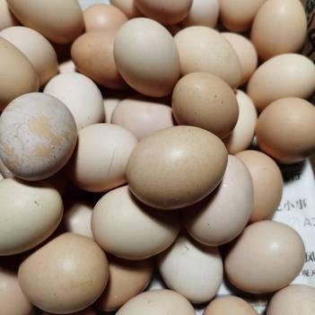 江蘇小紅心初生蛋草雞蛋粉蛋直發420枚180元