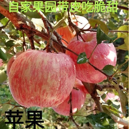 河北省唐山市遷安市 蘋果脆甜蘋果補充維生素蘋果帶箱十斤裝蘋果包郵