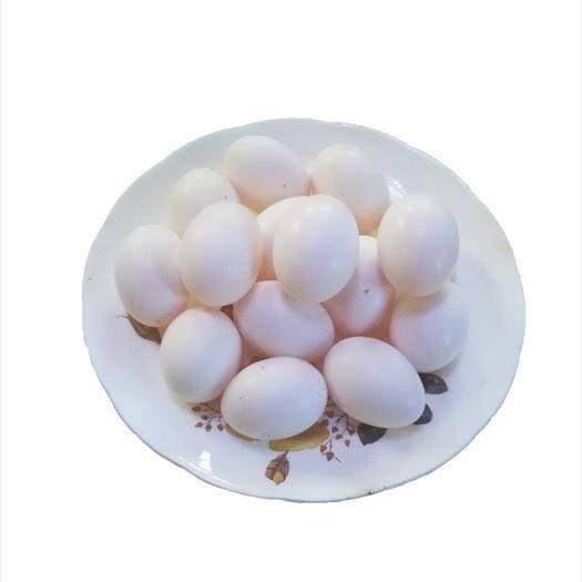 河南省洛陽市洛龍區 自家鴿場 |優質鴿子蛋 |純糧喂養 |食用鴿蛋 |批發零售