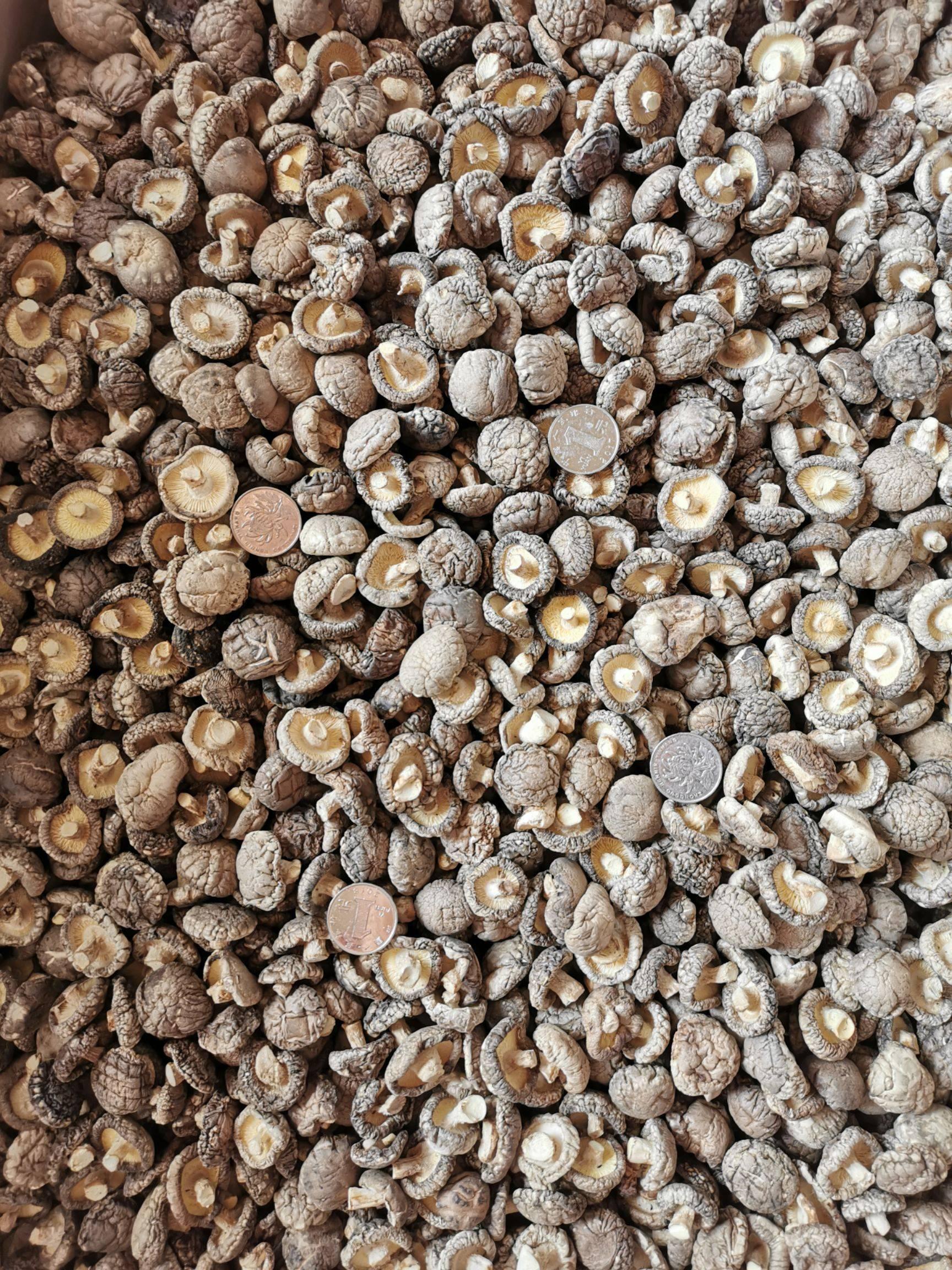 [光面菇批发]光面菇  香菇   黑面A3   22.5    精选菇    足干价格28元/斤