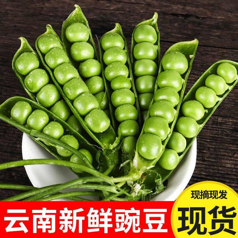 [豌豆批发] 云南豌豆荚新鲜蔬菜类农家自种带壳大青豆荷兰甜豆角批发包邮价格35元/箱