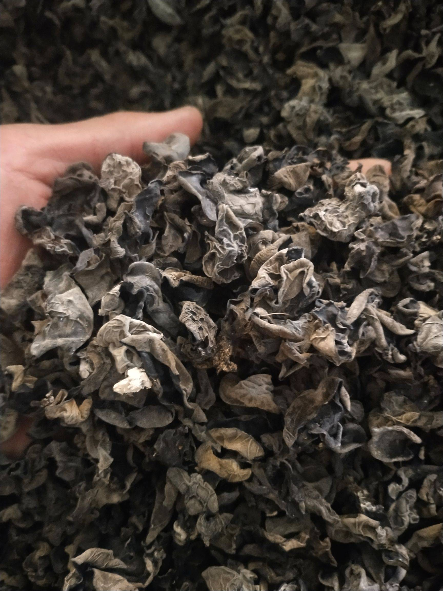 [黑木耳批发] 1.2东北黑木耳餐馆食堂炒菜专用,5斤21省份中通快递包邮价格25.8元/斤