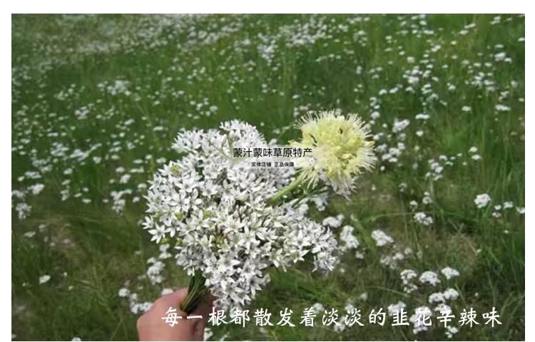 [韭菜花批发] 呼伦贝尔大草原天然韭菜花酱价格5.5元/斤
