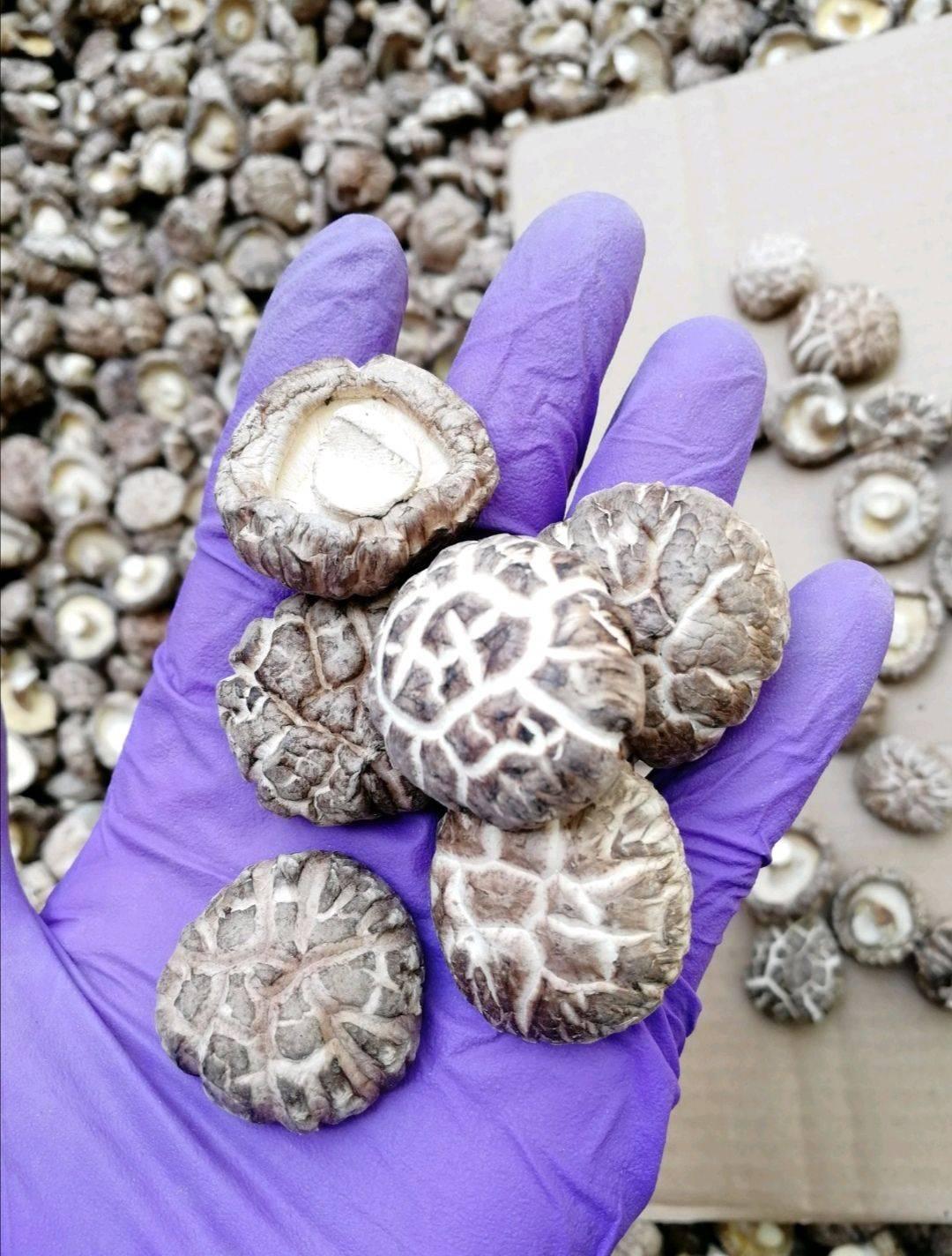 [花菇批发]精选肉厚花菇 剪脚 一手货源花菇干货 基地直销品质保证价格22.5元/斤