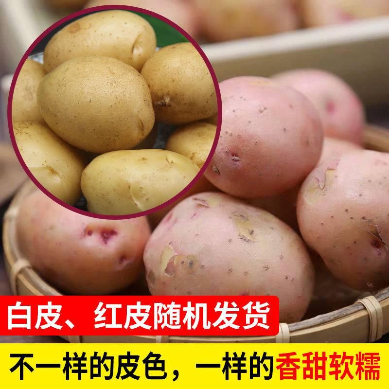 [土豆批发] 现挖新鲜云南土豆批发10/5斤装洋芋马铃薯黄心精品土豆新鲜豆价格13.8元/箱