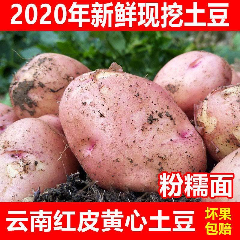 [黄心土豆批发] 云南土豆新鲜现挖红皮黄心土豆10斤5斤新鲜小土豆洋芋农家自价格16元/箱