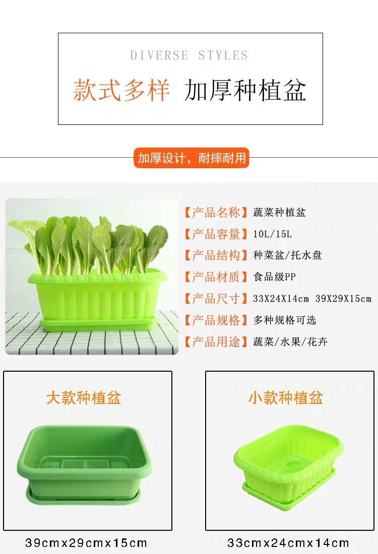 [救心菜批发]救心菜 高钙菜、养心菜盆景,盆栽,绿化价格19.9元/袋