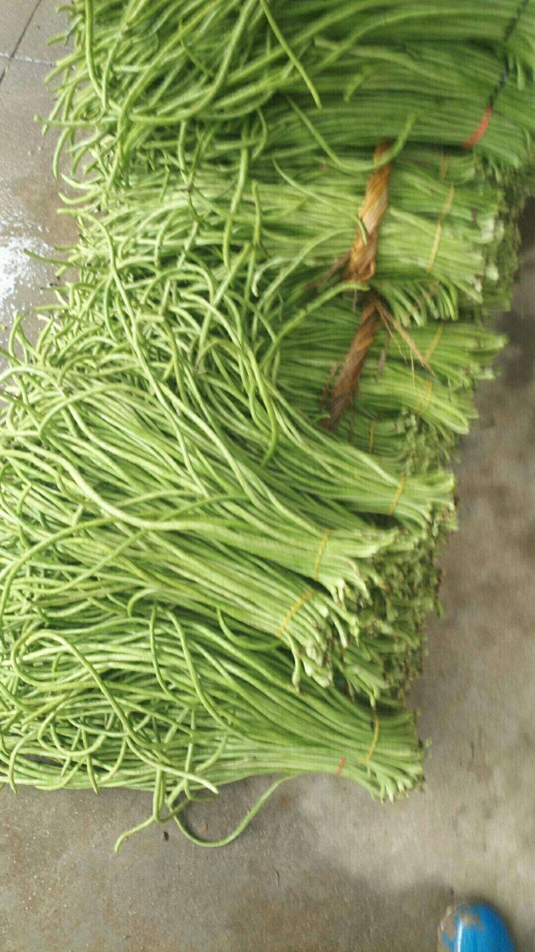 [长豇豆批发]长豇豆 绿色无公害蔬菜,条长条直,一等货价格1.25元/斤