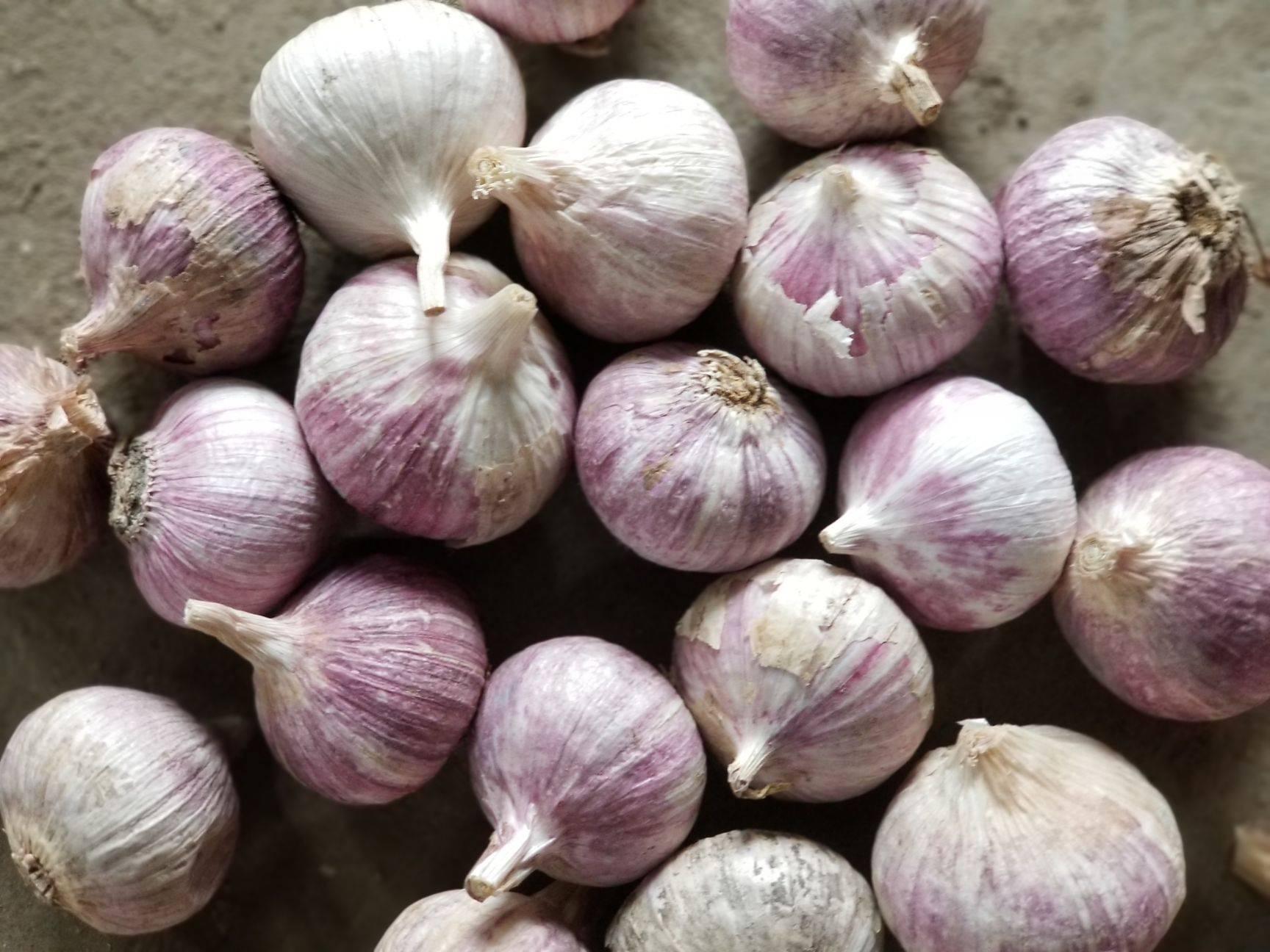 [独头蒜批发] 独头蒜,规格3.04.0无泥沙,蒜味浓。价格6.8元/斤