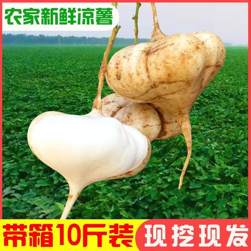 [凉薯批发] 新鲜凉薯时令土瓜孕妇蔬果豆薯农家红土现挖白沙地瓜葛根番薯现挖价格27.4元/箱